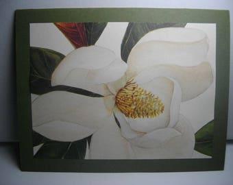 Magnolias 8-Card Box