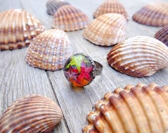 Starfish ring, terrarium jewelry, sea terrarium, glass globe ring, resin jewelry, gift for woman, glass ring, vial