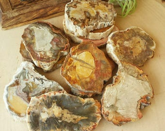 Petrified Wood for Protection, Strength, Success and Grounding | Healing Crystals | Organic Gemstone | Polished Stones, Witchcraft, Wicca