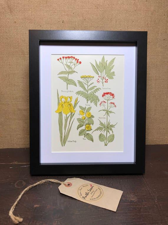 Botanical Book Plate Print - Vintage Botanical - Tea Plant - Thorough Wart - Sassafras - Valerian - Yellow Flag - Mounted Plant Illustration