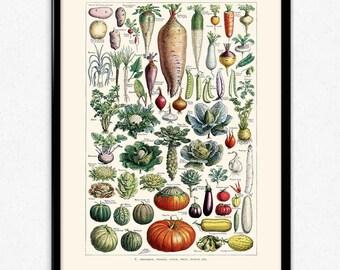 Vegetables Illustration Vintage Print 2 - Vegetables Poster - Vegetables Art - Kitchen Decor - Kitchen Art - Botanical Science - Larousse