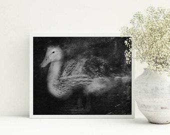 Animal prints for nursery - Animals prints - Black and white art, print, wall art,, baby duck nursery, printable art, grey, 8x10 prints, A3