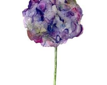 Watercolor flower, purple hydrangea. Art print.