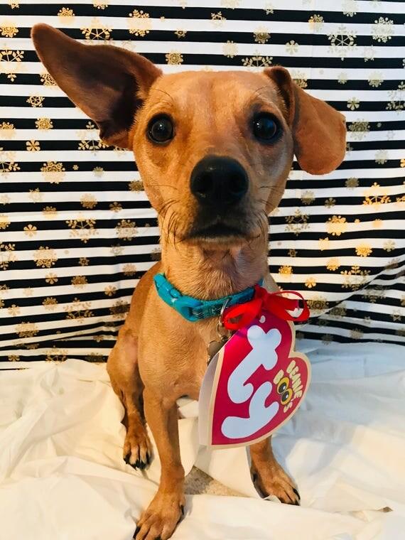 Realistic Beanie Baby Heart Tag Dog Pet Halloween
