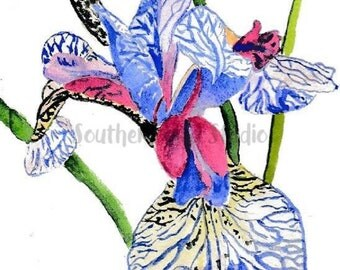 Iris, irises, watercolor iris, watercolor art, Oxford MS, Ole Miss, flower art, flower painting, Easter gifts, Mothers Day gifts, gifts