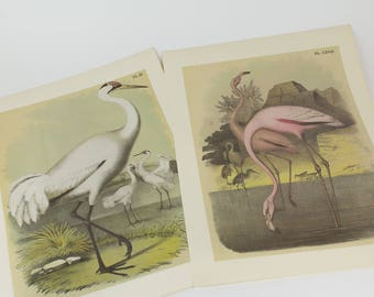 Vintage White Crane - Whooping Cranes - Flamingo  Lithograph Print for Gallery Wall - Set of 2 Prints -  Studer's and Theodore Jasper