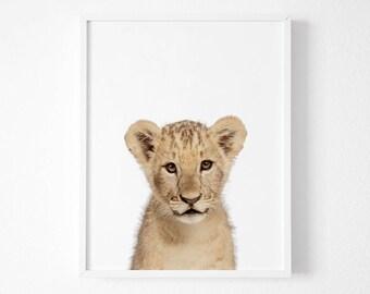 Lion print, Lion  Printable Wall Art, Animal prints for nursery, Lion  wall art, Nursery Decor Safari, 8x10, 11x14, 30x40, A3, A4,