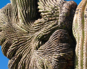 Desert Cactus Side Print Photography or Stretched Canvas