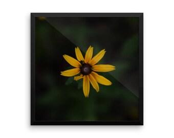 Black-Eyed Susan - Flower - Yellow - Framed Print