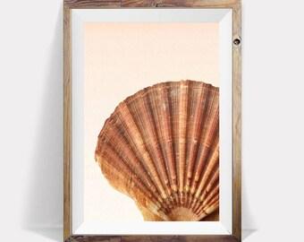 Seashell Art,Seashell Print,Seashell Poster,Beach Decor,Bathroom Decor,Bathroom Wall Art,Bathroom Prints,Coastal Wall Art,Coastal Wall Print