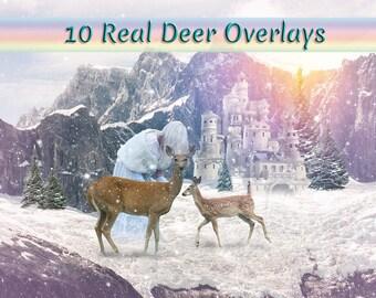 Real Deer Overlays
