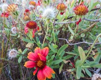 Flower Art, Flower Decor, Flower Home Decor, Wall Pictures, Flower Photography, Flower Artwork, Flower Wall Art, Flower, Flower Picture