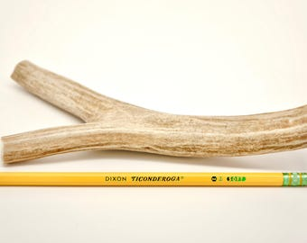 Antler Dog Chew, One (1) Large DEER Antler, Natural and Organic FREE SHIPPING