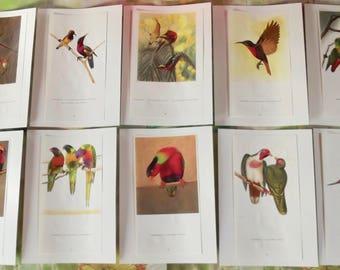 10 old engraving Board 1960's birds of paradise Paradisier songbirds, Hummingbird, Parrot, Lori, Lorikeet, Eclectus Parrot Australia Asia