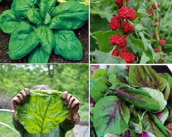 Spinach (4 variety)