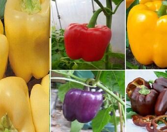 Sweet Pepper (5 variety)