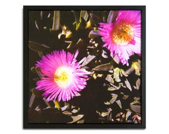 """Fine Art Photography """"Pigface"""" Framed Stretched Canvas"""