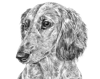 Long Haired Dachshund Print