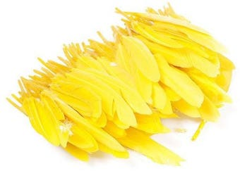 10 yellow goose feathers