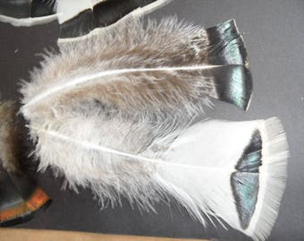 rare superb quality, white, natural orzac feather.