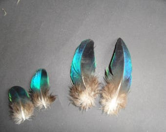2 pairs of Peacock Sapphire, specific to this bird beautiful iridescence!