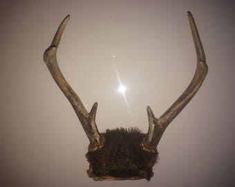 Real deer antlers, Deer horns, 6 point antlers, Antlers, Antler wall decor, Country wall decor, Deer antlers