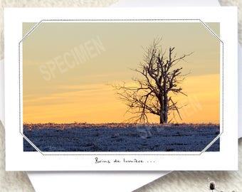 070... Frozen tree...