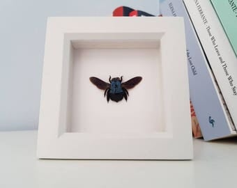 Real Taxidermy - Blue Carpenter Bee