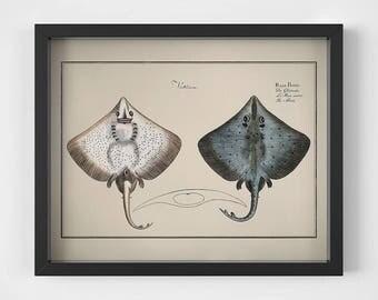 Wall art prints, Vintage fish print, Fish art, Nautical printables, Antique animal print, Nautical vintage, 11x14 print, Instant download