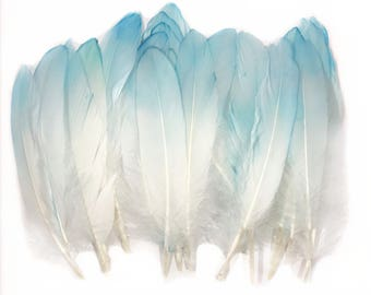 6-8 inch Blue dip died Natural Goose Feathers