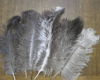 Set of 10 20-30 cm lot 3 ostrich feathers