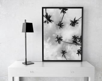 Palm Tree Print, Palm Decor, Palm Tree Art, Palm Tree Photo, Black and White Photography, Tropical Wall Art, California Print
