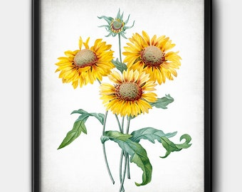 Gaillardia · Banket Flower · Vintage · Botanical · Instant Download · Nature · Printable #207