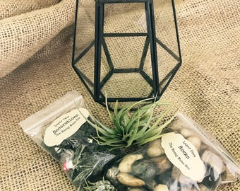 Black Geometric Terrarium DIY Kit