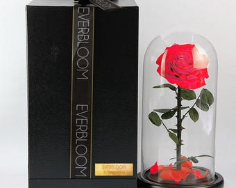 Real Beauty and The Beast Rose dome Everbloom by Meaghen King