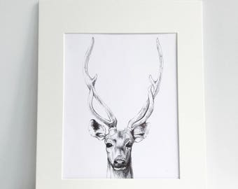 8'' x 10'' Matted Deer Ink Drawing Print, Pen and Ink, Art Print