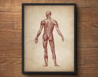 Anatomy print, Anatomy poster, Muscular system print, Human anatomy poster, Medical print, Anatomical drawing, Human anatomy, Wall art