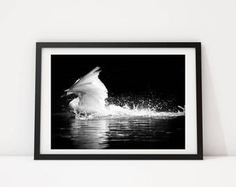 Black and White Photo, Black and White Wall Art, Printable, Printable Art, Instant Digital Download, Swan Photo, Swan, Inspirational Photo