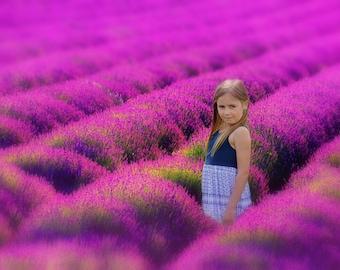Lavender Field Digital Background / backdrop - Instant Downloads