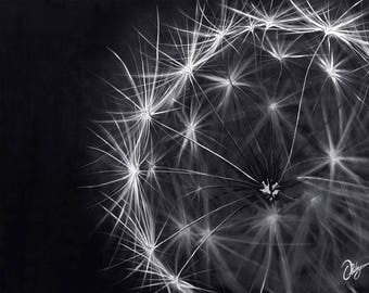 Giclee Print - Dandelion - Flower - Black and White