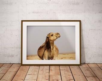 Camel Print - Desert Animal Wall Art, Digital Print, Peekaboo Print, Arabic Poster, Bohemian Prints , Dubai Photo, Moroccan Decor, African