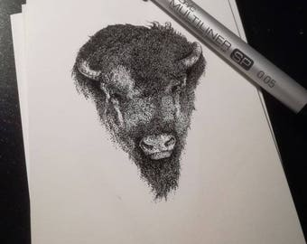 Point image bison Buffalo