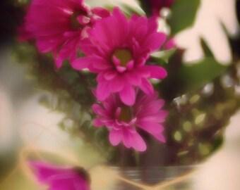 Abstract close up of morning pink daisy, macro photography, botanical print, wall decor, photography gifts, wall art,floral photography