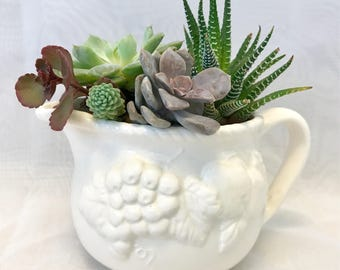 Succulent planter/shabby chic/pot/live succulents/Gift/Garden/succulent arrangement