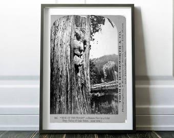Human faced tree print / Vintage photo print / Horror print / Tree photo / Vintage tree print / Tree print art / Tree poster / Stereograph