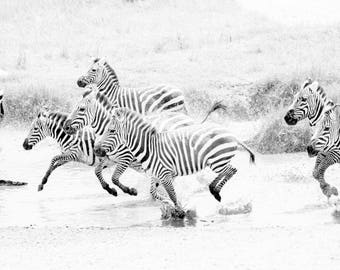 Limited edition fine art wildlife photography print: 'Run Wild'