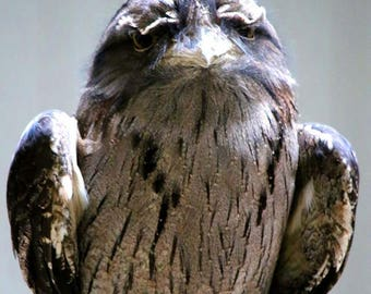 Wise Owl, Bird, Fine Art Photography, Nature Photography, Color Photography