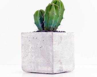 Cactus in a square concrete pot