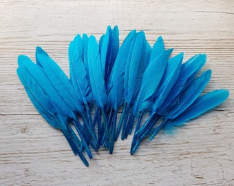 Set of 10 long blue feathers