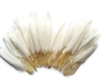 Indian white feather x 10
